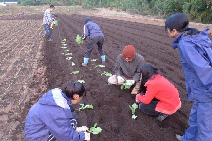 農業実習(9年生)