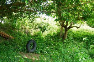 タイヤブランコのある裏庭