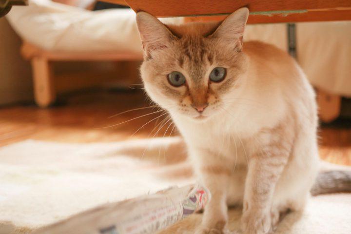 アーレで飼っている猫1