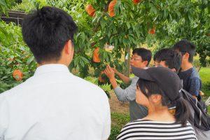 桃木プロジェクト