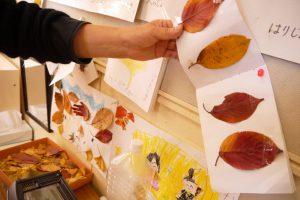 落ち葉を集めて分類