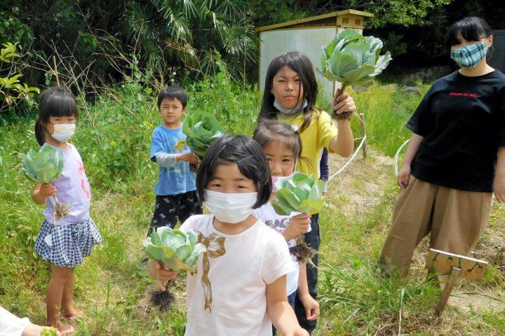 校庭の菜園で収穫~(スクールワーク)
