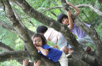 木登りも楽しいよ!