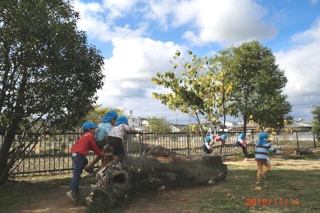 倒木やしなる木で遊ぶ