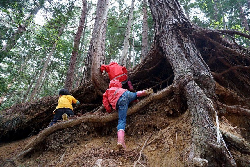 森の中は天然の遊具がたくさん