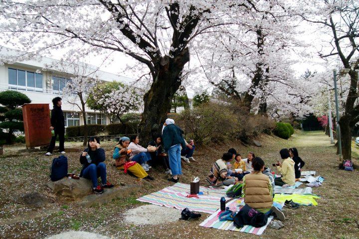 桜の下でお弁当