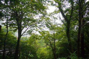 自然豊かな周辺の森
